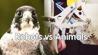 How Do Robots Copy Animals? | At-bristol Science Centre