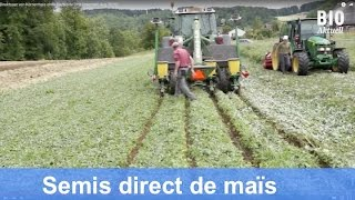 Semis direct de maïs sans herbicide - Quatre années d