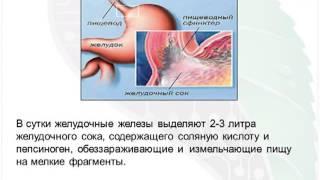 Лечение гастрита, ЖКТ, Хеликобактер пилори, язвы, паразитов желудка, пищеварения приборами Биомедис