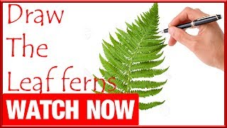 How To Draw The Leaf ferns - Learn To Draw - Art Space