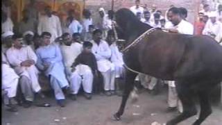 Nisar Stud Farm, Amer Nisar Khan, Bakarkot, Festival, Gujranwala, Horse Dancing in Pakistan,