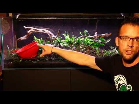 Easy aquascaping using Dennerle plants