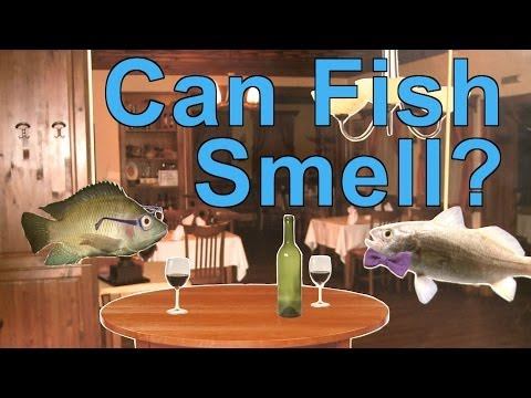 Can Fish Smell? | A Moment Of Science | PBS