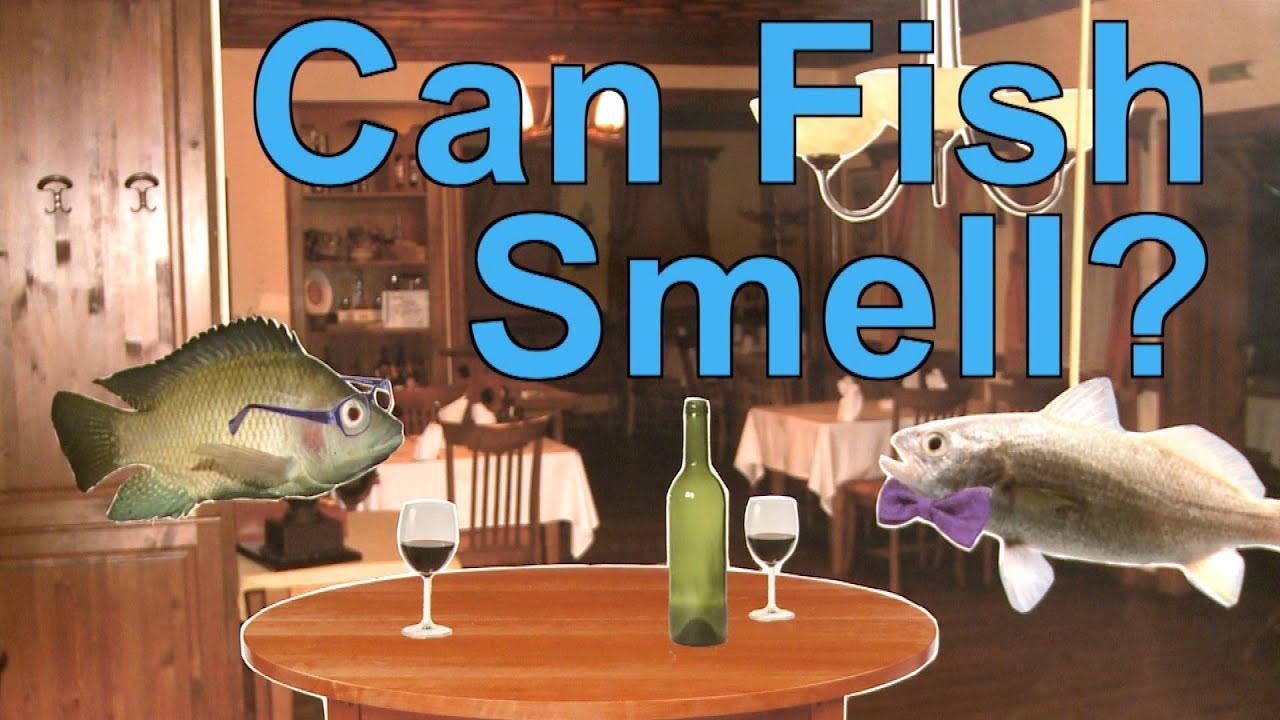 Can fish smell a moment of science pbs youtube for Why does my pee smell like fish