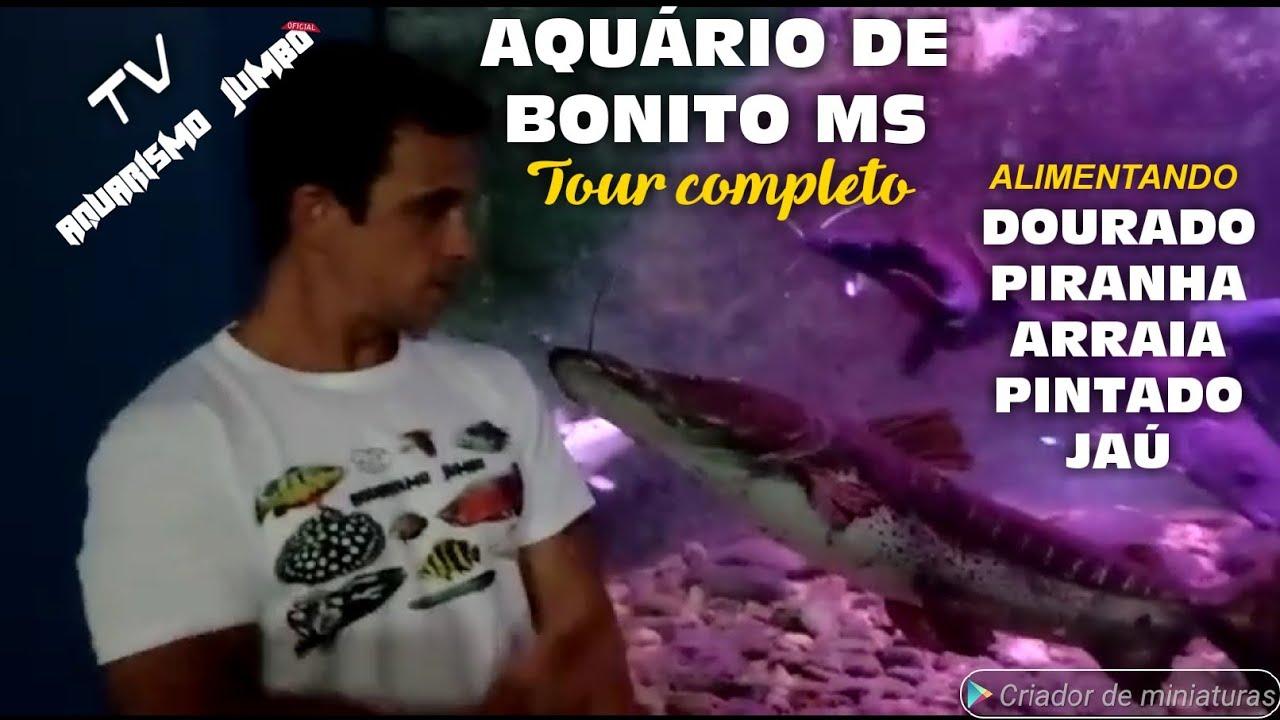 TV AQUARISMO JUMBO - Visita Aquário de Bonito MS Tour Completo + Bônus Alimentação Predadores Jumbo