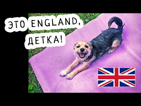 Йога с Собакой Мордой Вниз / Меню на Неделю / Англия - Harrogate