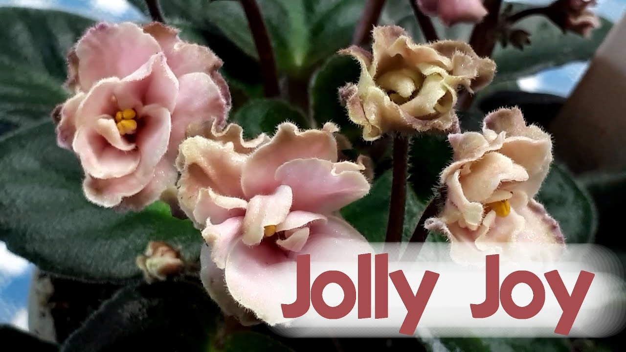 Download Jolly Joy and placing flowers