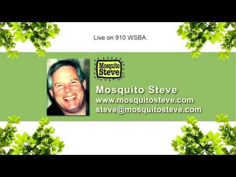 Mosquito Steve talking about zika virus live on Pennsylvania radio