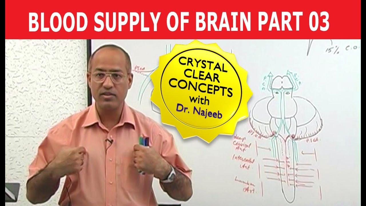 Blood Supply To Brain Neuroanatomy Part 311 Youtube