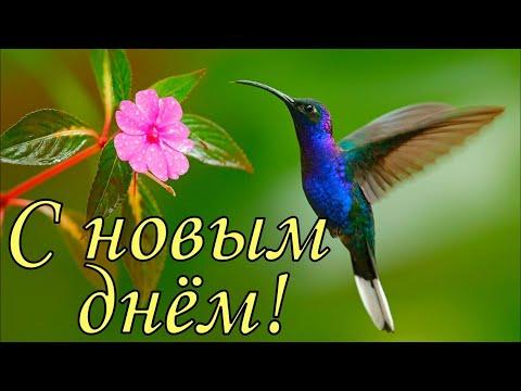 Доброе утро ! С НОВЫМ ДНЕМ ! С добрым утром и хорошим днем . Открытка с добрым утром .
