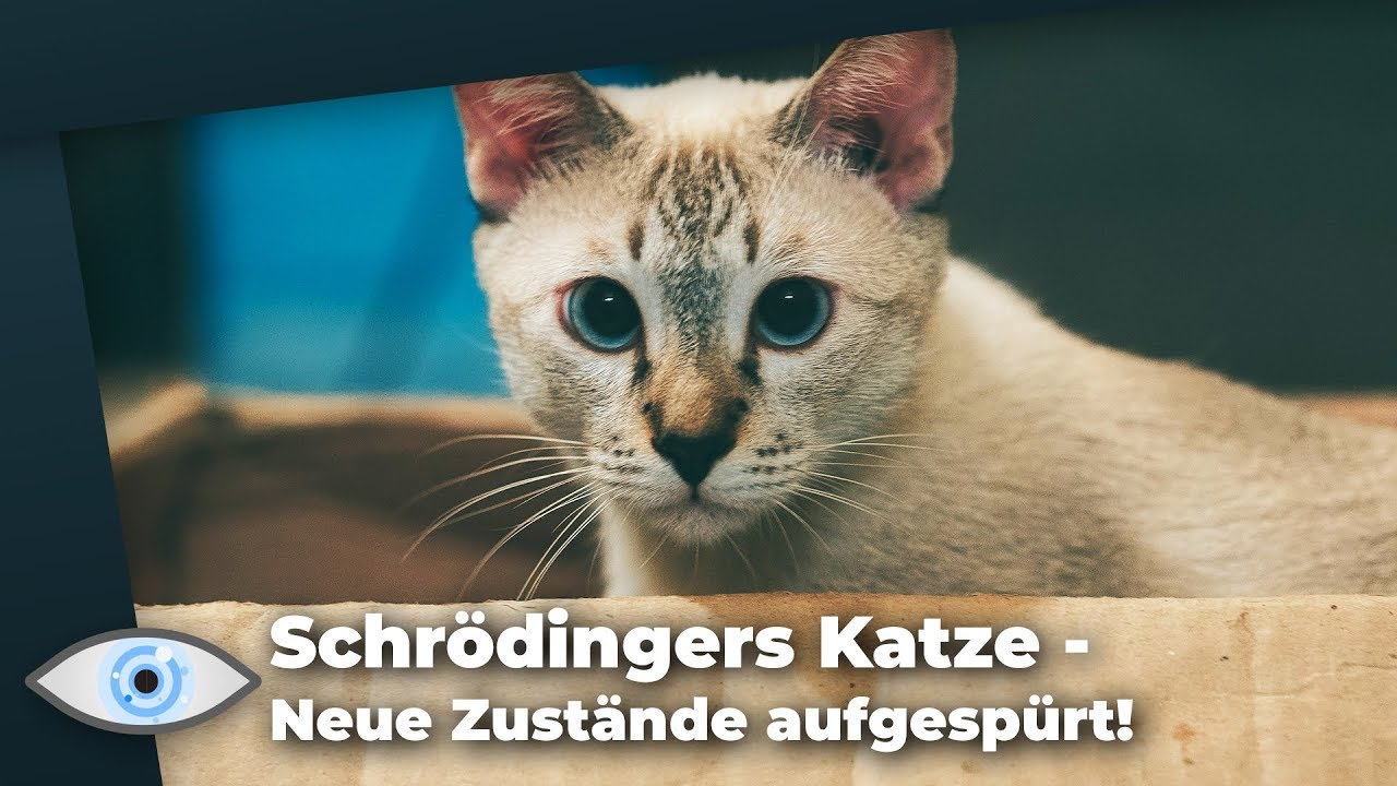 Schrödingers Katze Youtube
