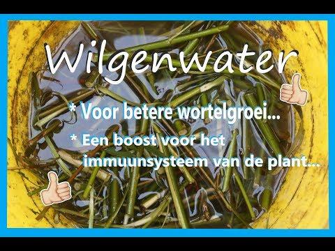 Wilgenwater i.p.v. stekpoeder.
