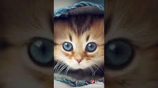 Котик смотрит в вашу сторону!!!!!)
