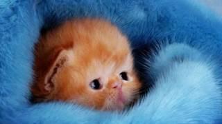 Самые милые котята в мире | Scientific Facts