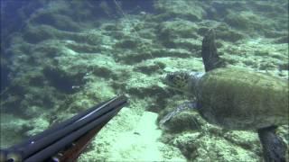 Zıpkınla balık avı Marmaris