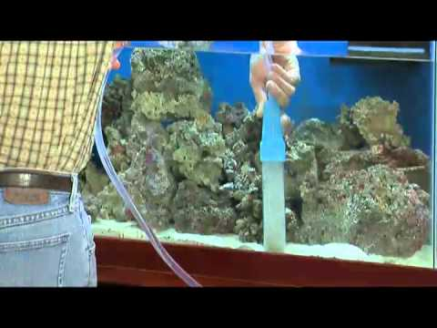 How to change the water in a fish tank mp4 doovi for How to change fish tank water