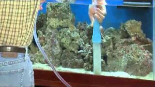 How To Change Aquarium Water (drsfostersmith)
