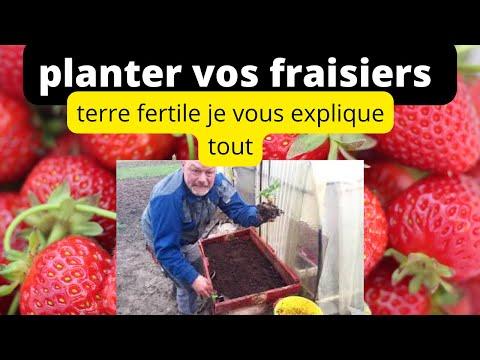 Comment planter des fraisiers dans son jardin youtube - Comment planter des fleurs dans son jardin ...