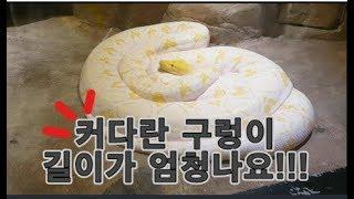 길다란 뱀과 파충류 조류 어류가있는 동물원에서 놀아요