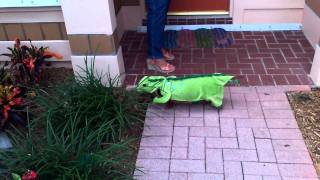 Our Dachshund, Greta, In Her Lizard Costume For Halloween 2011