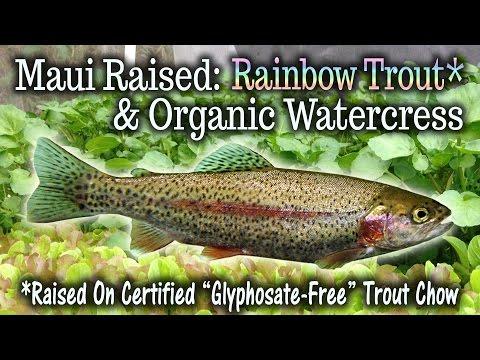 Maui Aquaponic Trout Farm: Commercial Expansion