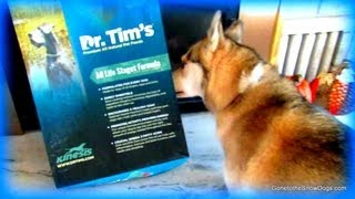 Siberian Husky Dog Food Discussion!