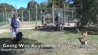 Alpha Dog Training Australia   4 Day Fast Track Course