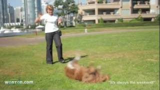 Dog Training In Vancouver - Wonton