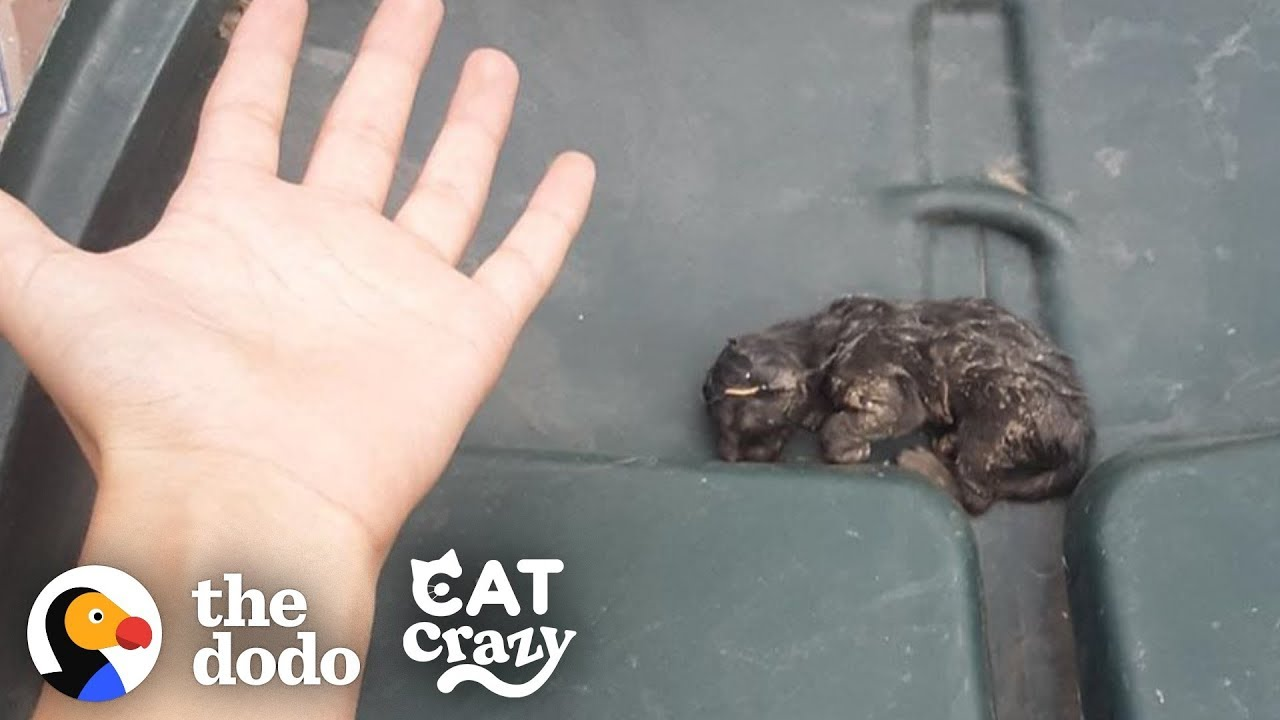 Teeny Kitten Found in the Trash Nurses on His Dad's Hand When He Sleeps   The Dodo Cat Crazy
