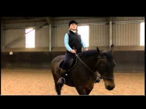 Horse Riding At Middleton Park Equestrian Centre