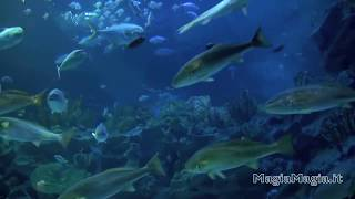 ✅ Relaxing Music for Study and Stress with Aquarium Background - HD