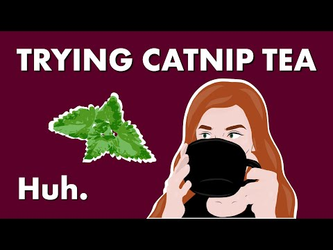 How Does Catnip Work And What Can It Do? — Huh.