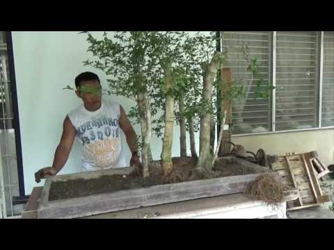 Bonsai Tutorials for Beginners: How to Plant Forest Group Planting