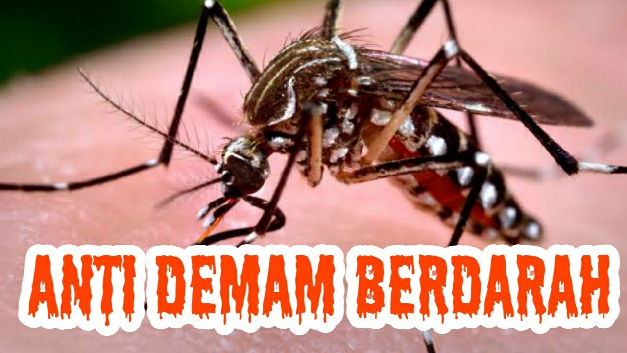 Cara Mencegah Demam Berdarah (DBD) - YouTube