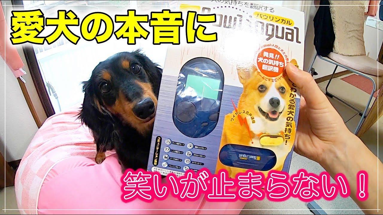 【やだモンモンモーン】愛犬の本音を聞いてみたら、めっちゃ面白かったww