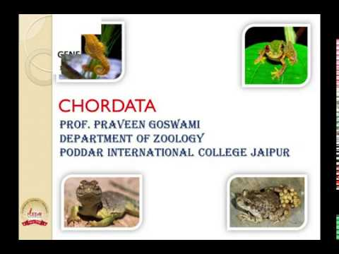 animal-kingdom-classification---vertebrates- -prof.-praveen-goswami- -poddar-international-college