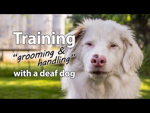 Deaf Dog Training: Grooming and Handling