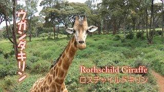 2012年7月に人生はじめてのアフリカのケニアに旅行に行きました。ナイロ...