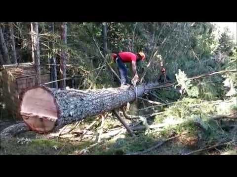 limbing a fallen tree