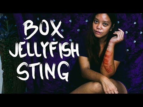 BOX Jellyfish STING!!!! (Bantayan Island Philippines)