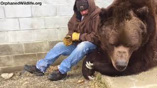Скачать When Your Bear Had A Hard Day And Needs Some Extra Love