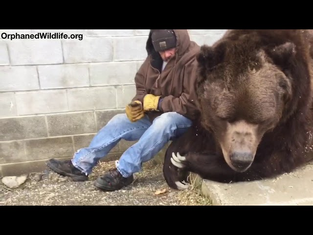 When your bear had a hard day and needs some extra love….