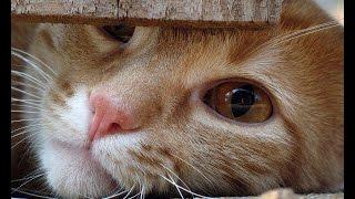 Смешные коты и кошки. Самая свежая подборка видео о смешных котах и кошках. Funny cats compilation!