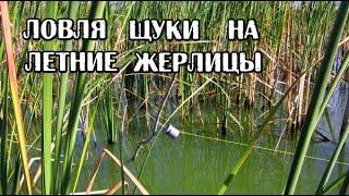 Рыбалка. Ловля щуки на летние жерлицы