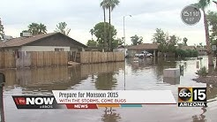 Mesa homes flooded last year invaded by roaches