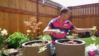 Planting Patio Planters For The Backyard May 2012 Part 1