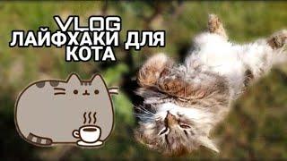 Vlog: ЛАЙФХАКИ ДЛЯ КОТА! УТРО И ПРОГУЛКА