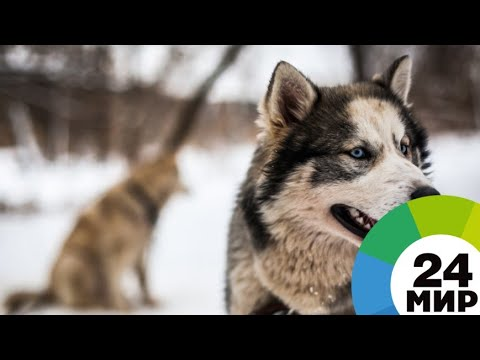 Как открыть питомник для собак