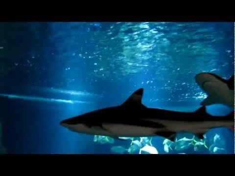 Aquarium du Trocadéro - Paris