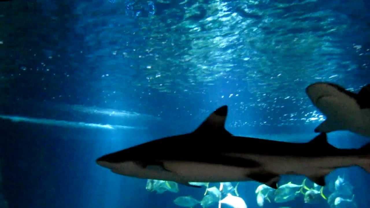aquarium du trocad ro paris youtube